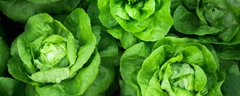 8 Things You Didn't Know About Lettuce